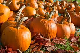 Pumpkins are Taking Over