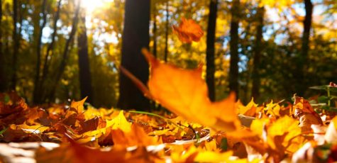 An Autumn Sonnet