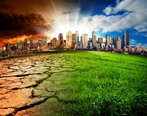 The Effect of Climate Change on Animals